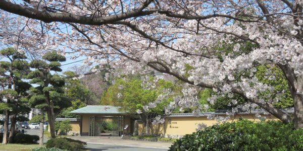 隠れ里車屋 桜
