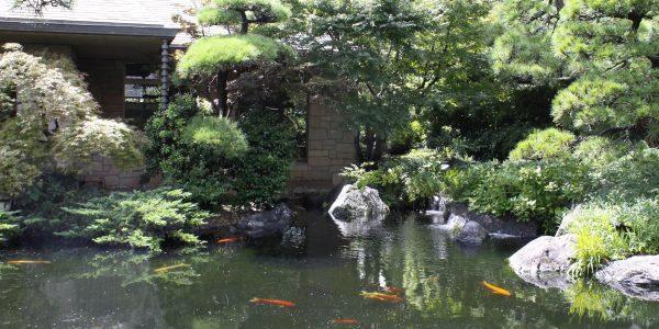 隠れ里 池
